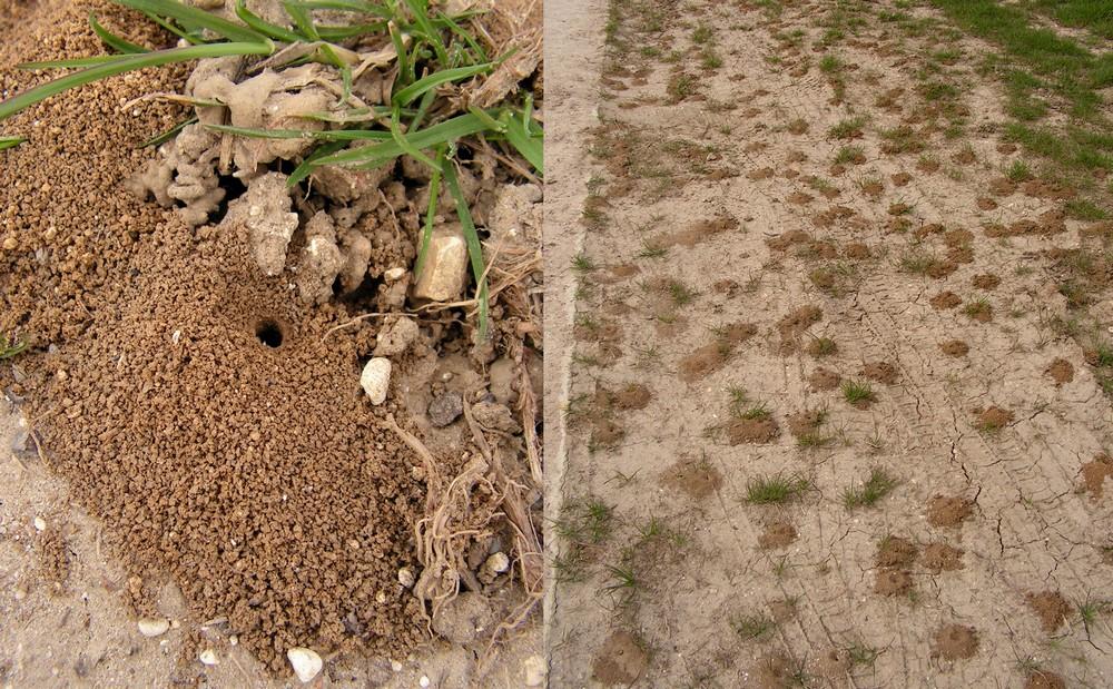 Montage nid tumulus symbiose biodiversit - Abeille nid dans le sol ...
