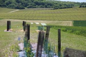 Différents aménagements favorables à la biodiversité sont présents sur cette parcelle.