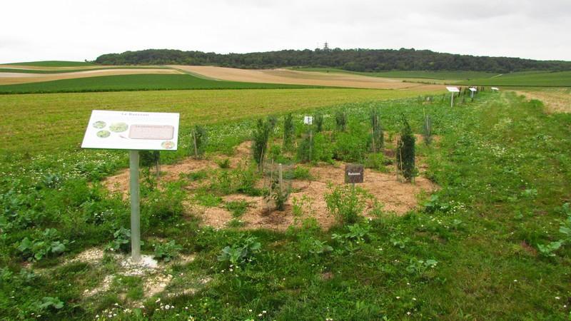 Buisson n°1 du Parcours Découverte de la Biodiversité - Berru