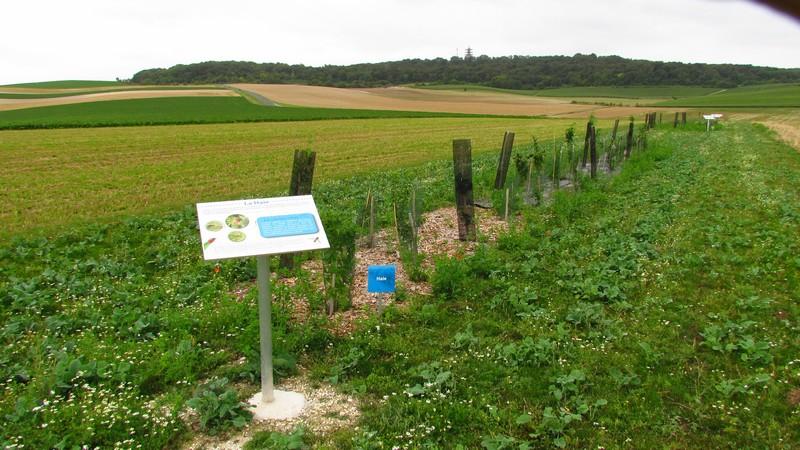 Haie du Parcours Découverte de la Biodiversité - Berru