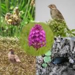 indicateurs_biodiv