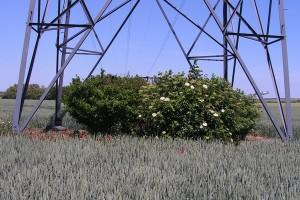 Aménagement sous un pylône