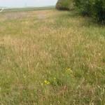 Couvert herbacé