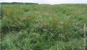 La jachère faune sauvage classique se compose de graminée comme la fétuque et de légumineuse comme le sainfoin et le trèfle.