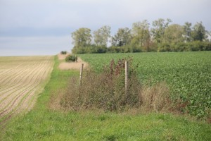 Les bouchons de végétation sur bande enherbée entre 2 cultures favorisent la préservation de la biodiversité.