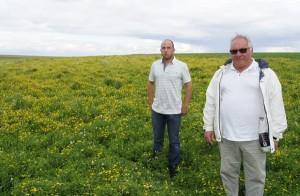 Alain et Grégory dans une parcelle de lotier en fleur qui devrait être récoltée mi-août.