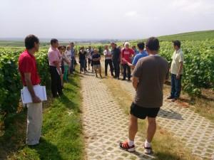 Visite Ambonnay 24-07-13