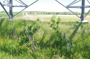 aménagement arbustif et herbacé sous pylône ligne RTE